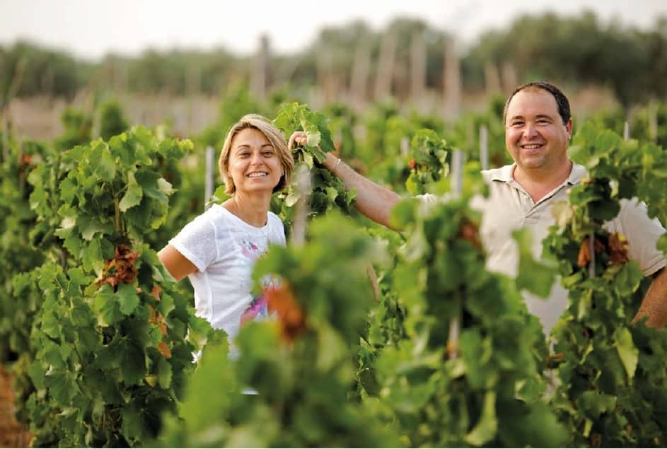 alt_Producteurs Tenuta Bastonaca dans vignes