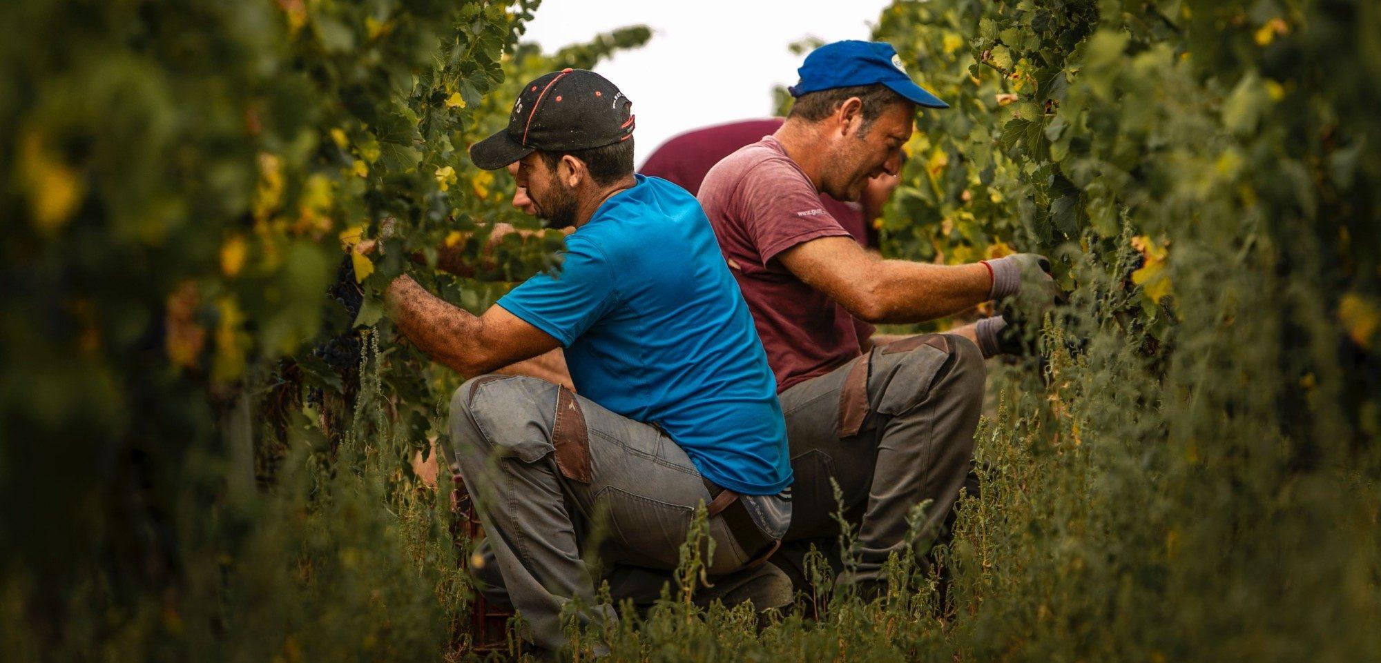La cave Gulfi en Sicile. Producteur de vins bios et durables. Grande qualité et prix ajustés.
